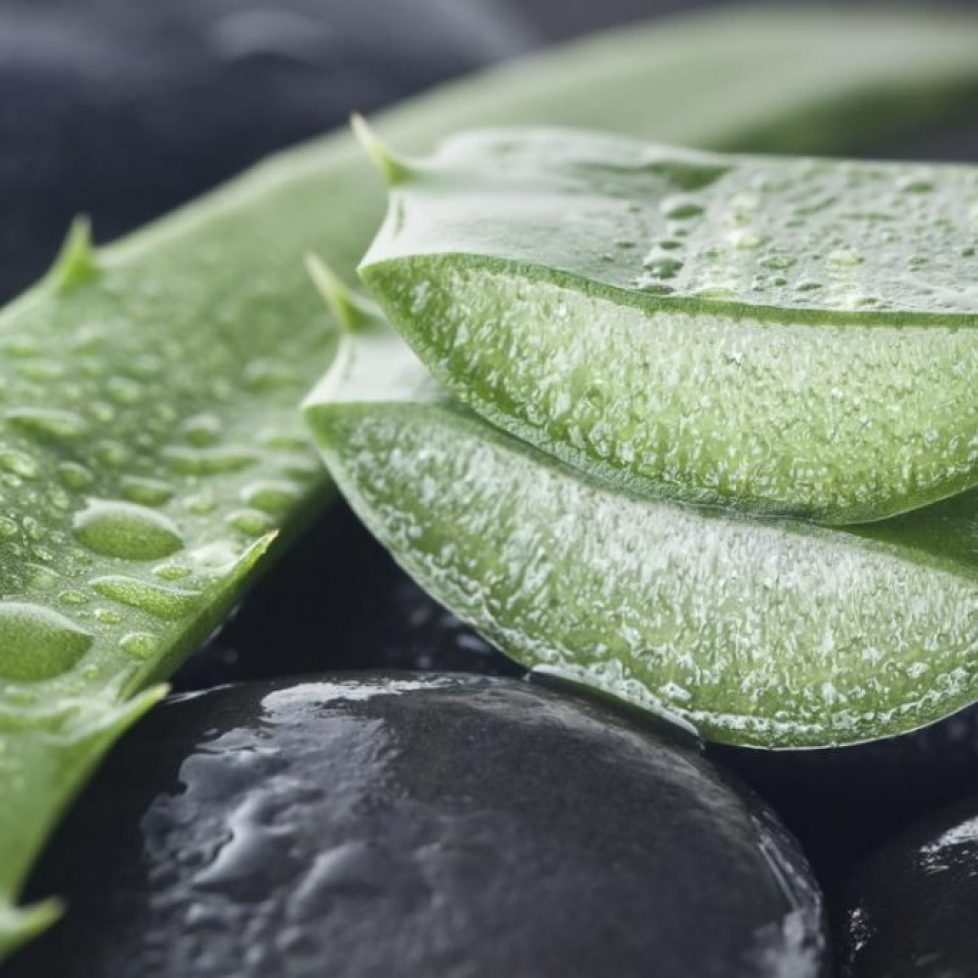 cut-aloe-vera-for-psoriasis